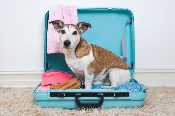 Mit dem Hund ins Ausland