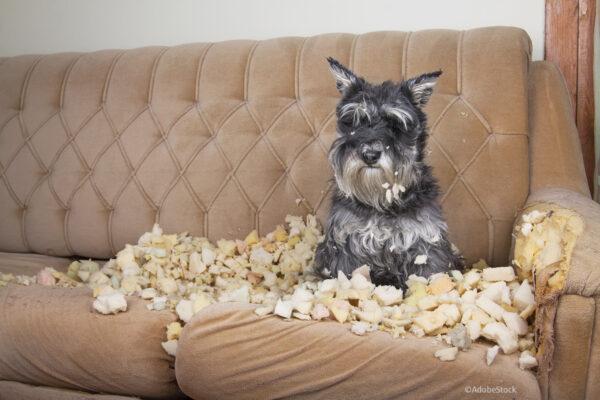 Wie sich Hundebesitzer absichern